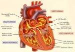 Хирурги из Краснодара перевернули сердце шестимесячному ребенку.