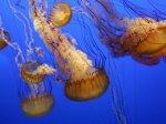 Не стоит пытаться заглушить ожог от медуз своей мочой.